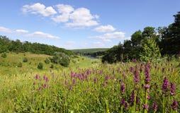 在域的淡紫色花 免版税库存照片