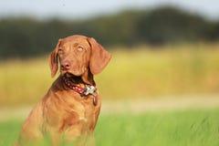 在域的狗 免版税库存照片