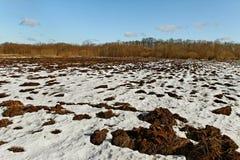 在域的第一雪。 免版税库存图片