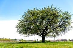 在域的结构树 夏天风景的图片 免版税库存图片