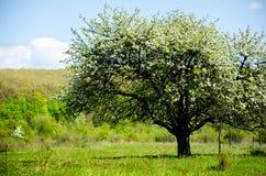 在域的结构树 夏天风景的图片 免版税库存照片
