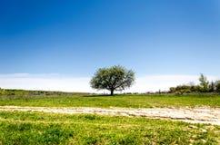 在域的结构树 夏天风景的图片 库存照片