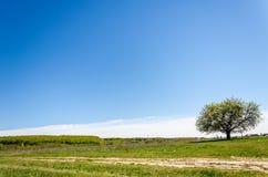 在域的结构树 夏天风景的图片 库存图片