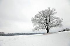 在域的结构树 免版税库存照片