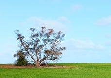 在域的结构树 库存照片