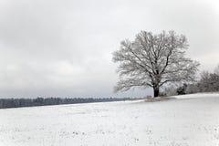 在域的结构树 免版税库存图片