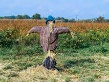 在域的稻草人 库存图片