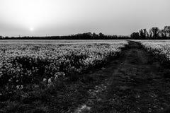 在培养的领域的日落与花 库存照片