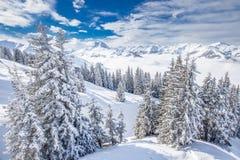 在基茨比厄尔滑雪胜地的新鲜的雪盖的树, Tyrolian阿尔卑斯,奥地利 免版税库存照片