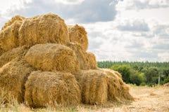 在堆堆积的大包黄色金黄秸杆在有蓝天的农场在背景 牲口的食物 免版税图库摄影