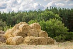 在堆堆积的大包黄色金黄秸杆在有蓝天的农场在背景 牲口的食物 免版税库存照片