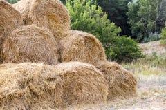 在堆堆积的大包黄色金黄秸杆在有蓝天的农场在背景 牲口的食物 库存图片