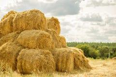 在堆堆积的大包黄色金黄秸杆在有蓝天的农场在背景 牲口的食物 图库摄影