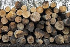 在堆堆积的日志,木材提取 砍伐森林 免版税库存照片