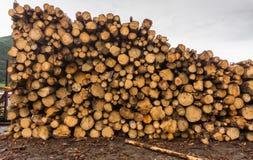 在堆堆积的被锯的日志在锯木厂 免版税库存照片