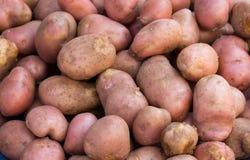 在堆的土豆 免版税图库摄影