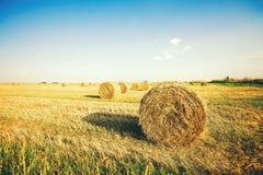 在堆的干草在领域 图库摄影