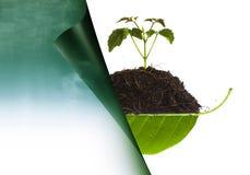 在堆的树苗在叶子和自然 库存图片