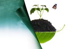 在堆的树苗在叶子和自然1 免版税库存图片