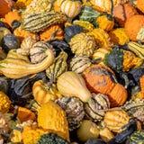 在堆的特写镜头视图桔子,白色,黄色,绿色南瓜在农夫市场上 免版税库存照片