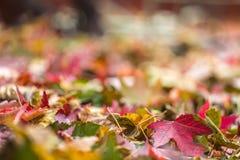 在堆的秋天叶子在秋天期间 选择聚焦与 库存照片