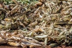 在堆的被收获的玉米 免版税图库摄影