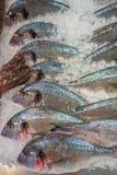 在堆的鲜鱼冰,在口岸的在马略卡,西班牙的d安德拉特斯港口 免版税库存图片