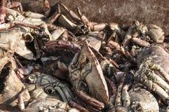 在堆的死的螃蟹在码头 库存图片