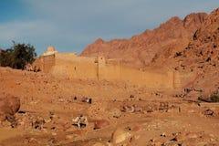 在堡垒修道院古老废墟的背景的骆驼  免版税图库摄影