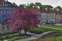在堡垒墙壁附近的五颜六色的房子在老镇在华沙 樱桃绽放 库存照片