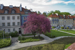在堡垒墙壁附近的五颜六色的房子在老镇在华沙 樱桃绽放 图库摄影