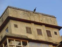 在堡垒大阳台的孔雀  免版税库存图片