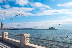 在堤防的海鸥 图库摄影