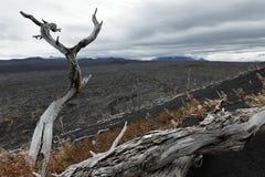 在堪察加半岛的自然灾害:在死的森林死的木头的被烧的树 免版税图库摄影