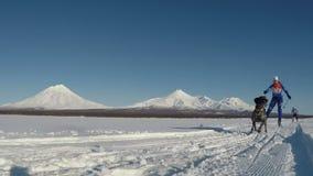 在堪察加火山背景的Skijoring