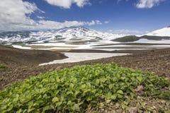 在堪察加附近火山的花田日出的 免版税库存照片