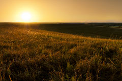 在堪萨斯Tallgrass大草原蜜饯国家公园的金黄日出 库存照片