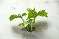 在塑料下的植物 免版税库存照片