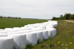 在塑料干草包裹的大包 库存图片