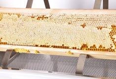 在塑料开盖的木盆的蜂窝在白色 免版税库存图片