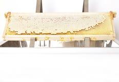 在塑料开盖的木盆的蜂窝在白色 免版税图库摄影