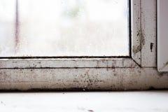 在塑料窗口的模子,家庭问题,在窗口的真菌 库存图片
