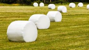 在塑料箔干草包裹的大包 免版税库存图片