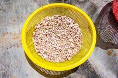 在塑料篮子的新鲜的大蒜 免版税库存照片