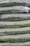 在塑料背景中包裹的黄瓜 库存图片