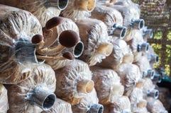 在塑料袋的新鲜的yanagi蘑菇 库存图片