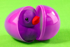 在塑料鸡蛋的橡胶鸭子 库存照片