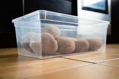 在塑胶容器的未加工的土豆在地板上 免版税库存照片