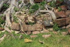 在塔基地的树根 库存图片