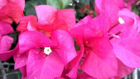 在塔曼Bunga努桑塔拉印度尼西亚的花汇集 免版税图库摄影